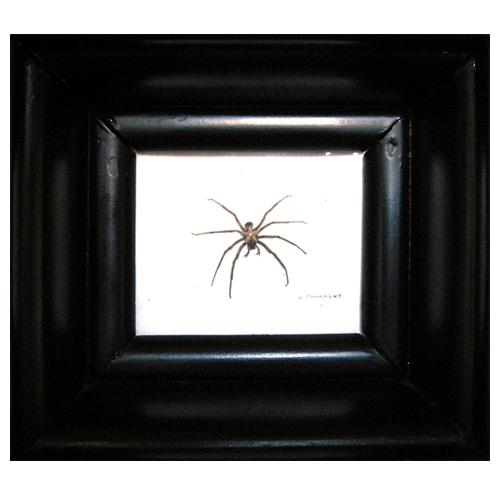 étoile d'araigné cadre