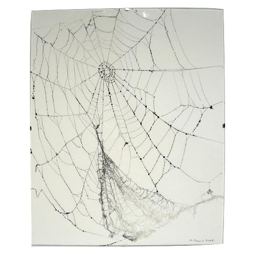 et toile d'araignée